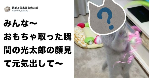 【癒し】騙されたと思って、この猫の「笑顔」を見て欲しいww