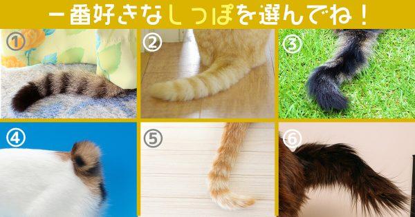 猫 しっぽ 涙腺の弱さ 心理テスト