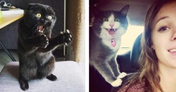 ネコの表情の豊かさよwww 11選