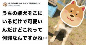 この柴犬は「笑顔が可愛すぎる罪」で逮捕します!