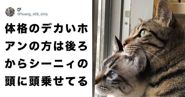 2匹の「外を眺める猫」が尊いから見て…