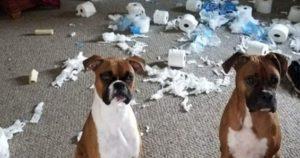 犬「反省しています」13選