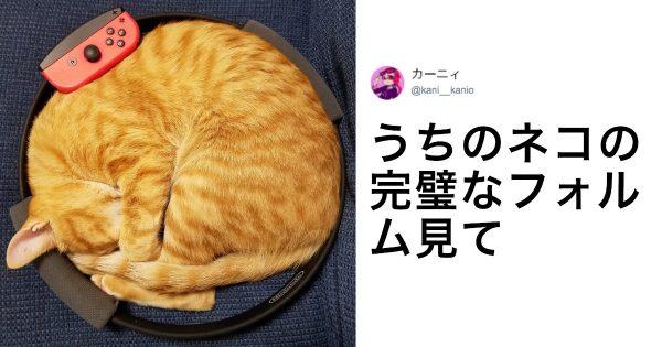 猫の身体に「骨」って存在しないんじゃないか? 9選