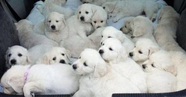 モフむぎゅ!子犬の集合体 12選