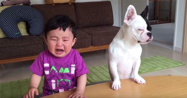 犬氏、赤ちゃんを泣かせる