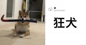 【大喜利】犬の写真を見てひとこと 8選