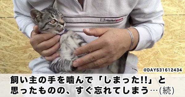 「すぐ忘れちゃう猫」が可愛すぎてオイタも許しちゃう😆