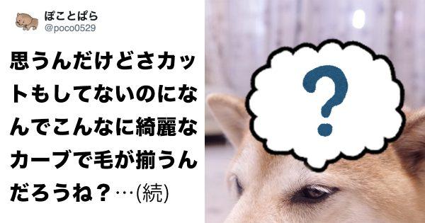 【マジの犬好きしか分からない】柴犬のアタマの不思議な魅力…✨