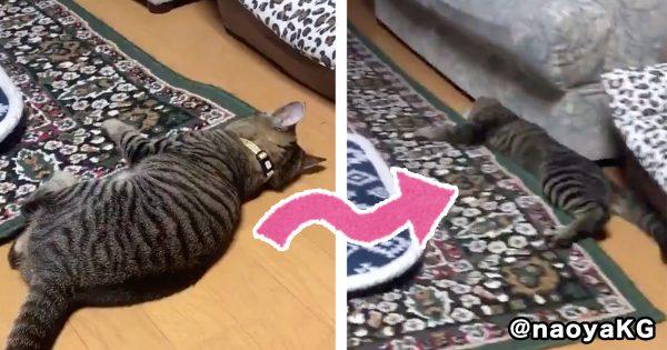 猫が「謎の競技」で金メダルを狙ってる件ww