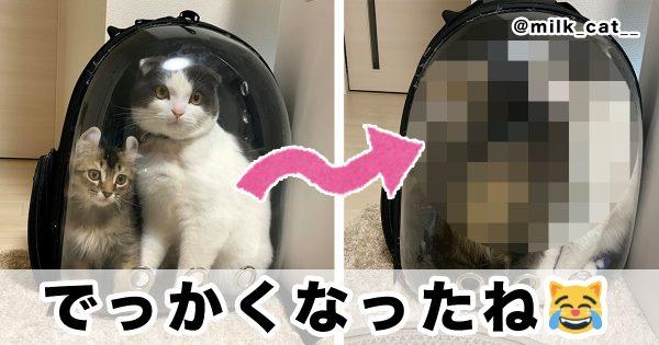 @milk_cat__