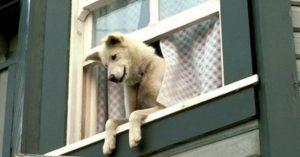 窓からイッヌ!!! 12選
