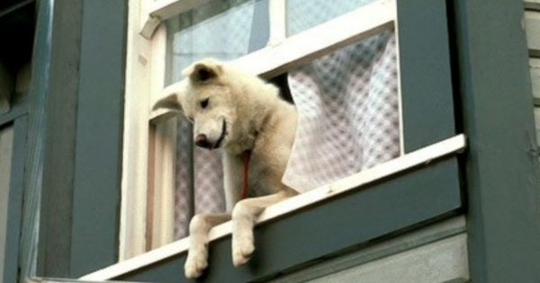 窓からイヌ