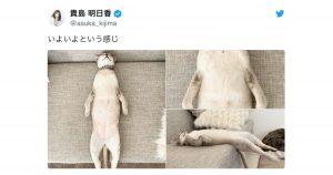 断言するが「寝てる猫」より可愛い生き物はいない 8選