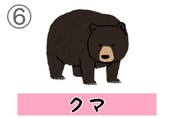 6bear