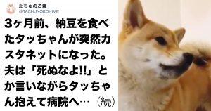柴犬に「発作」が出たので病院に駆け込んだ結果…ズッコケた。