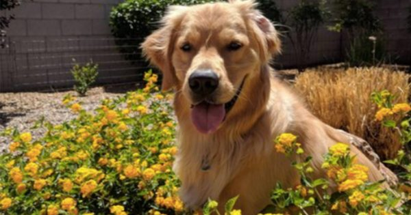 「犬+花=癒し」 12選