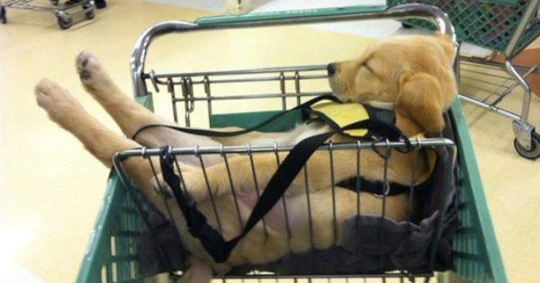 puppyasleep
