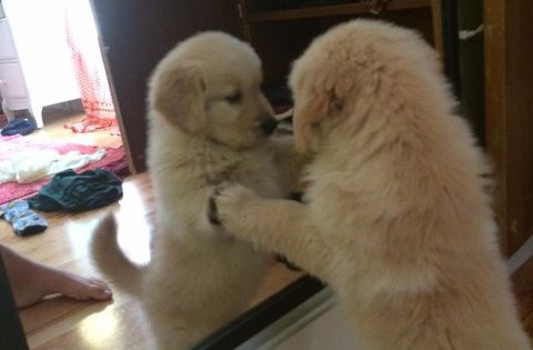 子犬の「未知との遭遇」 12選