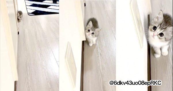 【※可愛すぎ注意】全人類が「猫派」になる動画です。