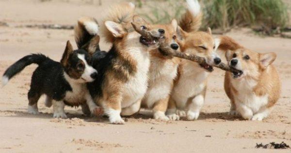 犬にとって最高の嗜好品は「枝」 12選
