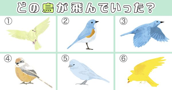 birdEYE