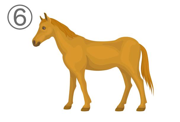 6horse