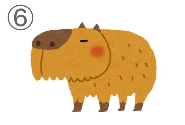6kapibara