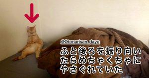 【マジ無理】在宅勤務と猫 9選