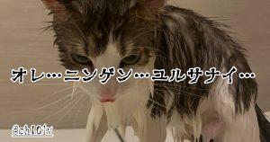 猫 VS お風呂 9選