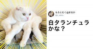 変幻自在の「なりきりにゃんこ」 8選