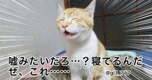 「眠る猫」の可愛さは反則だと思う 9選