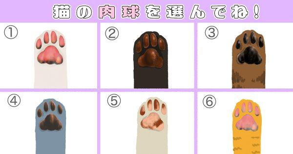 【心理テスト】あなたの性格の「猫レベル」がわかるニャン