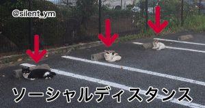 猫もコロナと戦ってるらしい 8選