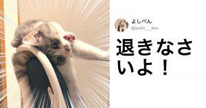 猫をアフレコしたら超カワイイ件 8選