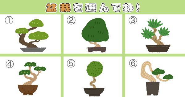 bonsaiEYE