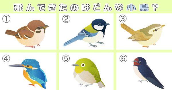 【心理テスト】あなたに「真実を見抜く力」があるか、小鳥を選ぶとわかる
