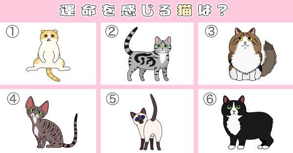 【心理テスト】運命を感じた猫はどれ?隠れた「もう1人の自分」がわかる