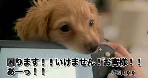「かまちょ犬」の可愛いイタズラのせいで何もできない 10選