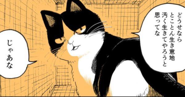 脱・野良を決めた猫たちの「尊すぎる最後」に泣いた