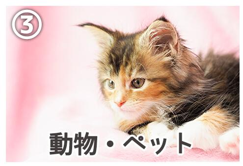 パソコン 壁紙 ツンデレ 心理テスト 動物 ペット