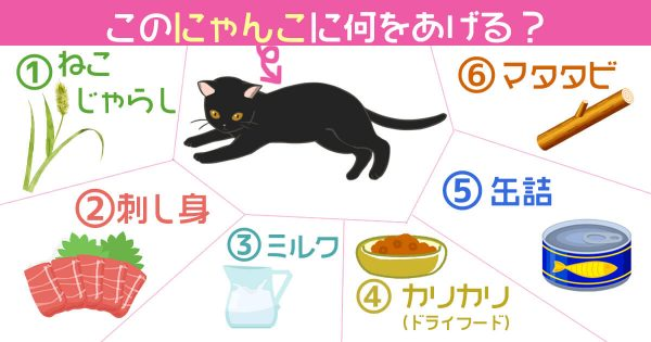 猫 性格 タイプ 心理テスト