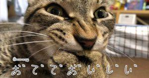 ネコ語を通訳するの楽しすぎwww 8選