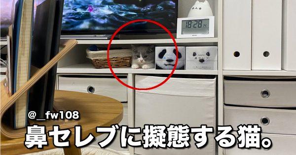 【よく見て】猫のステルス能力が本領を発揮した瞬間 7選