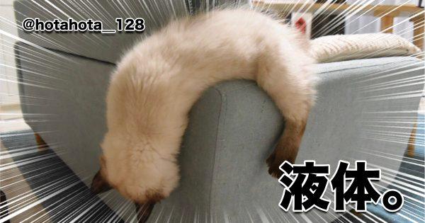 【速報】やっぱり猫は液体だった!! 8選