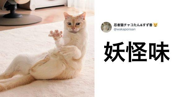 「変化の術」が使える猫 7選