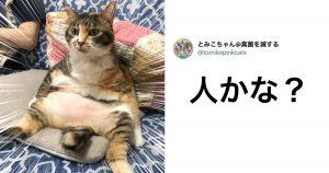 猫の「ヒト化」が止まらない 10選
