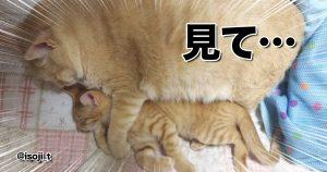コロナ禍でも「猫の密」だけは推奨したい 10選