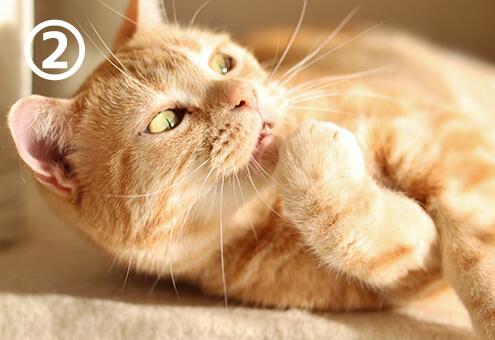 猫 にゃんこ 懐く ストライクゾーン 心理テスト