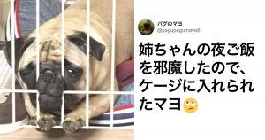 「犬の変顔」に秒で笑ったww 10選