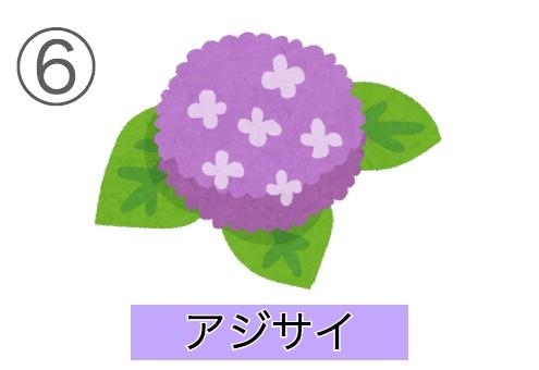 sentakushi6